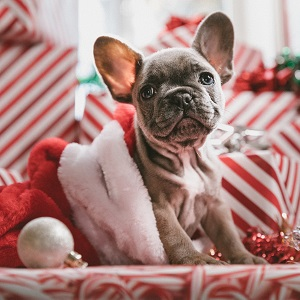 xmas dog Progressive Travel Recruitment