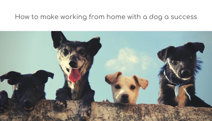 How to make working from home with a dog a success